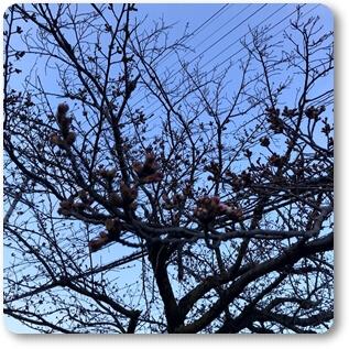 ご近所の桜03261