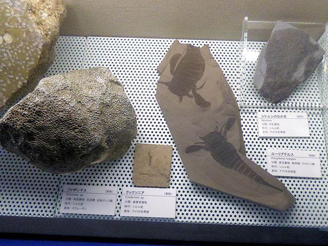 茨城県自然博物館の化石