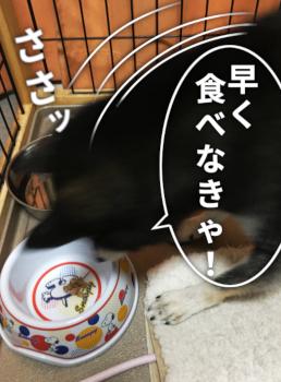 200203_natto2.jpg