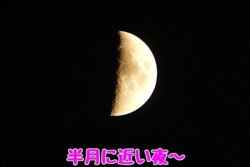 半月に近い夜