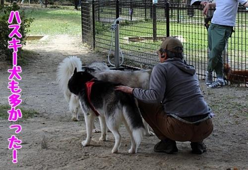 ハスキー犬も