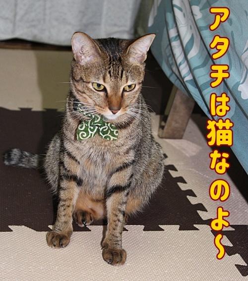 アタチは猫なのよ