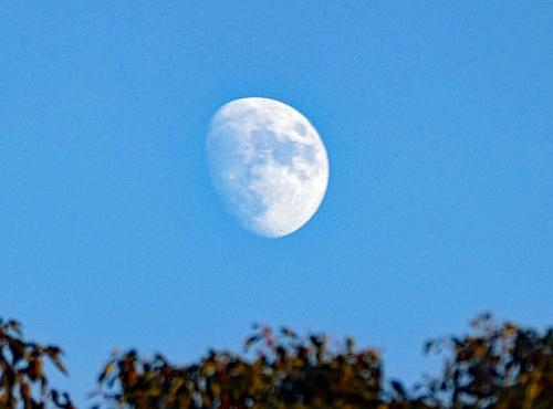 夕方のお月様
