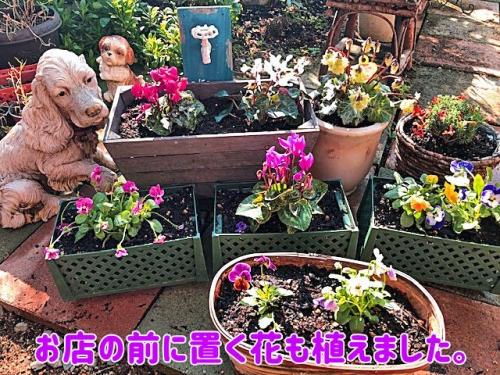お店の前に置く花も