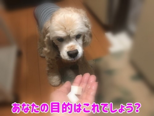 お豆腐でし