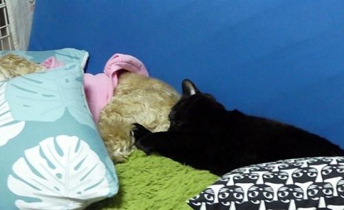 お二人さん爆睡中