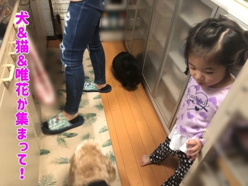 犬猫人が集まって