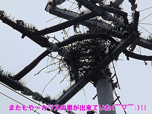 またもやカラスの巣が
