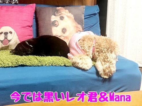今では黒いレオ君&Mana