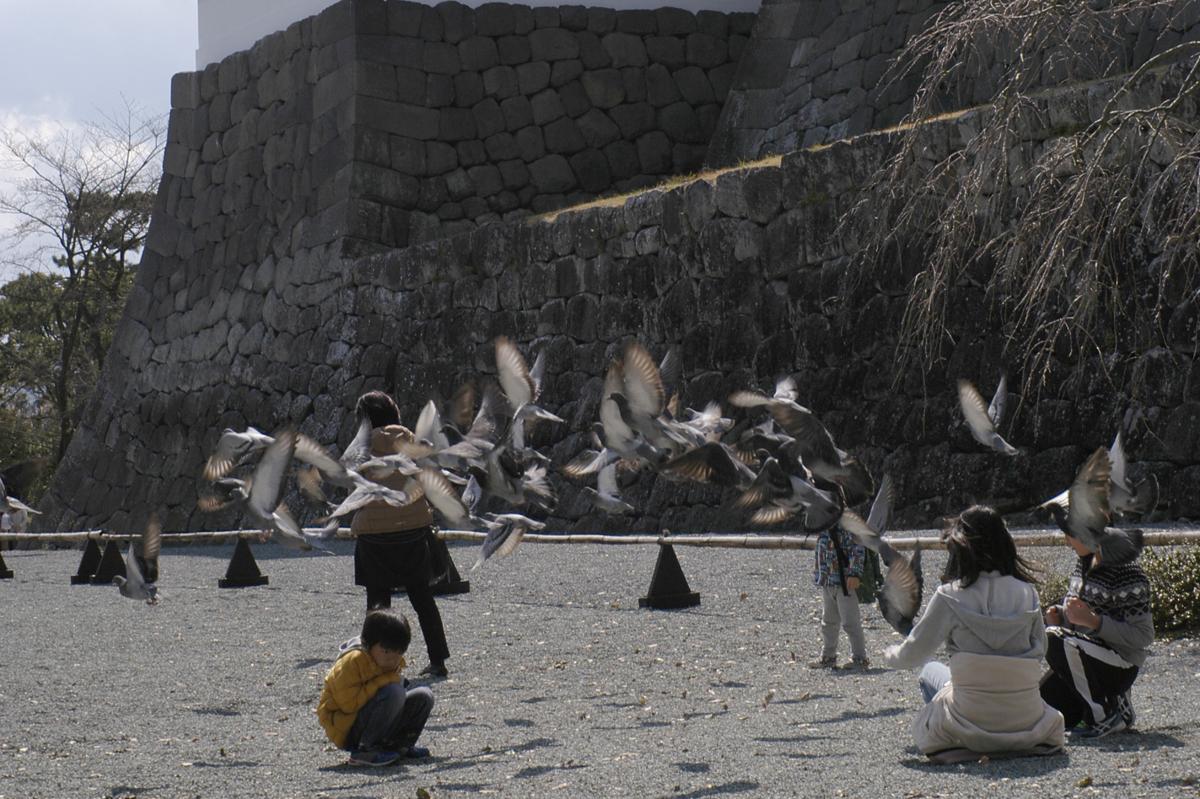 小田原スナップ城址公園の鳩に驚く子供達
