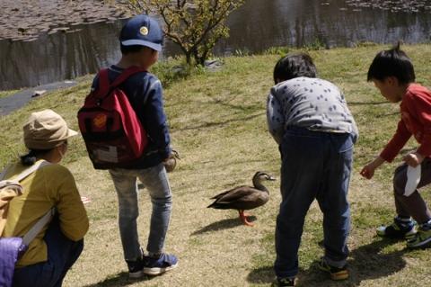 小田原フラワーガーデン池からがったカモを見る子供達