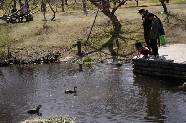 小田原フラワーガーデンの池で鯉に餌やりをする親子連れ