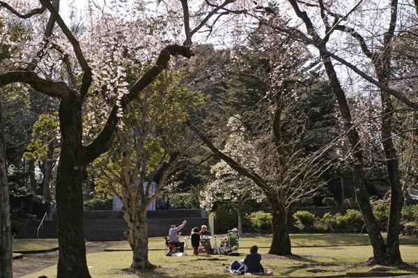 小田原スナップ城山公園慰霊塔前で花見をするグループ