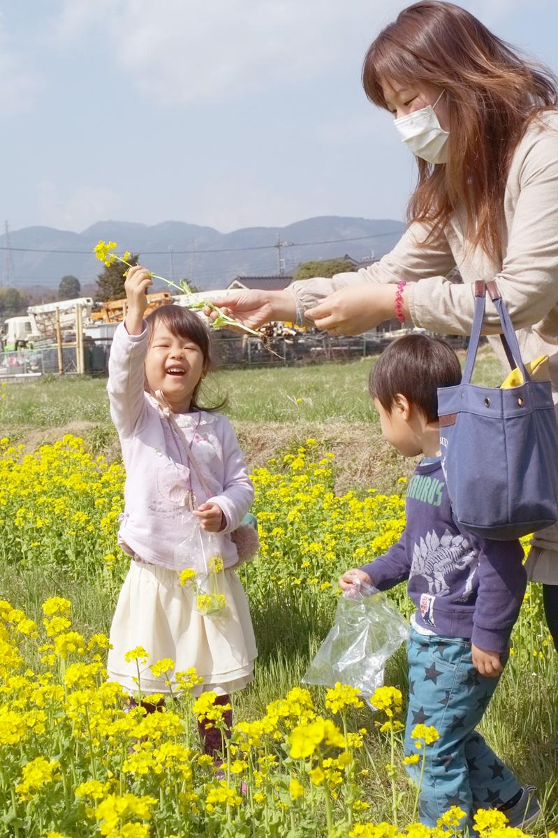 南足柄スナップ菜の花摘み