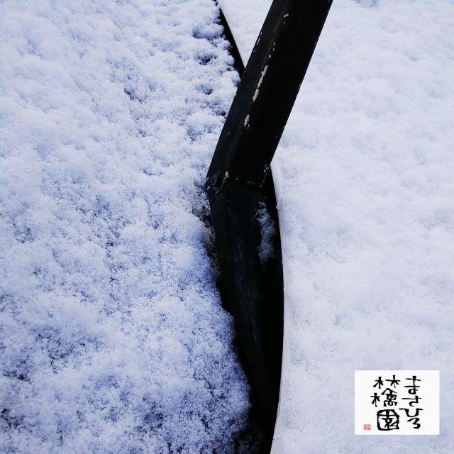 雪積もる20191115小