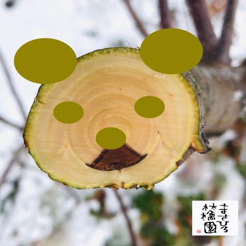 20191220剪定木の断面パンダ小