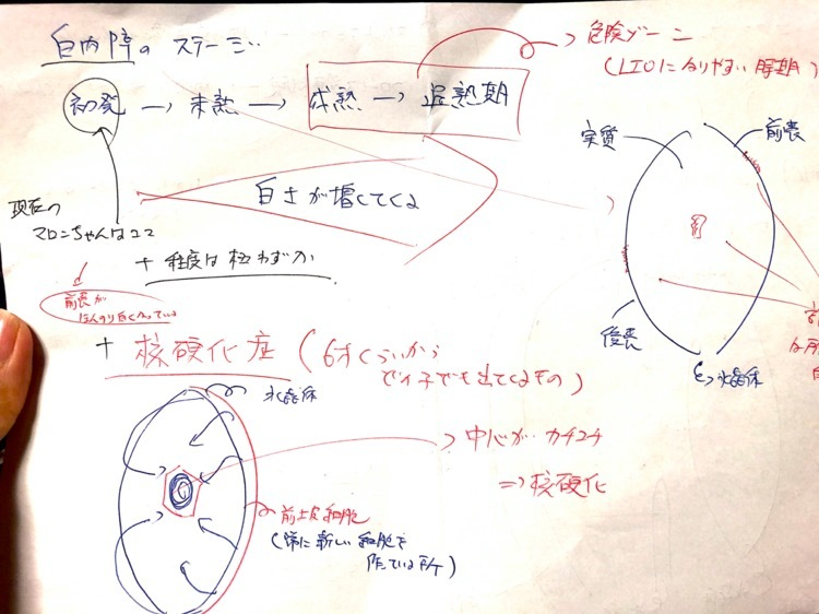 th_IMG_0572.jpg