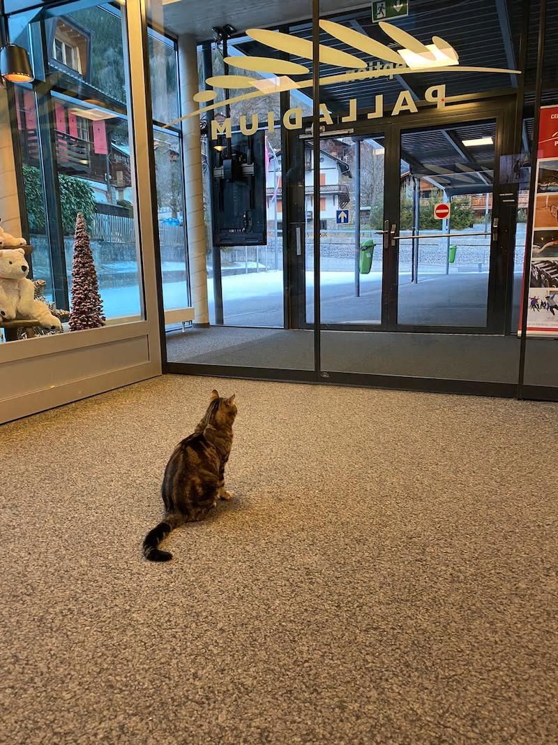 しょーまの猫