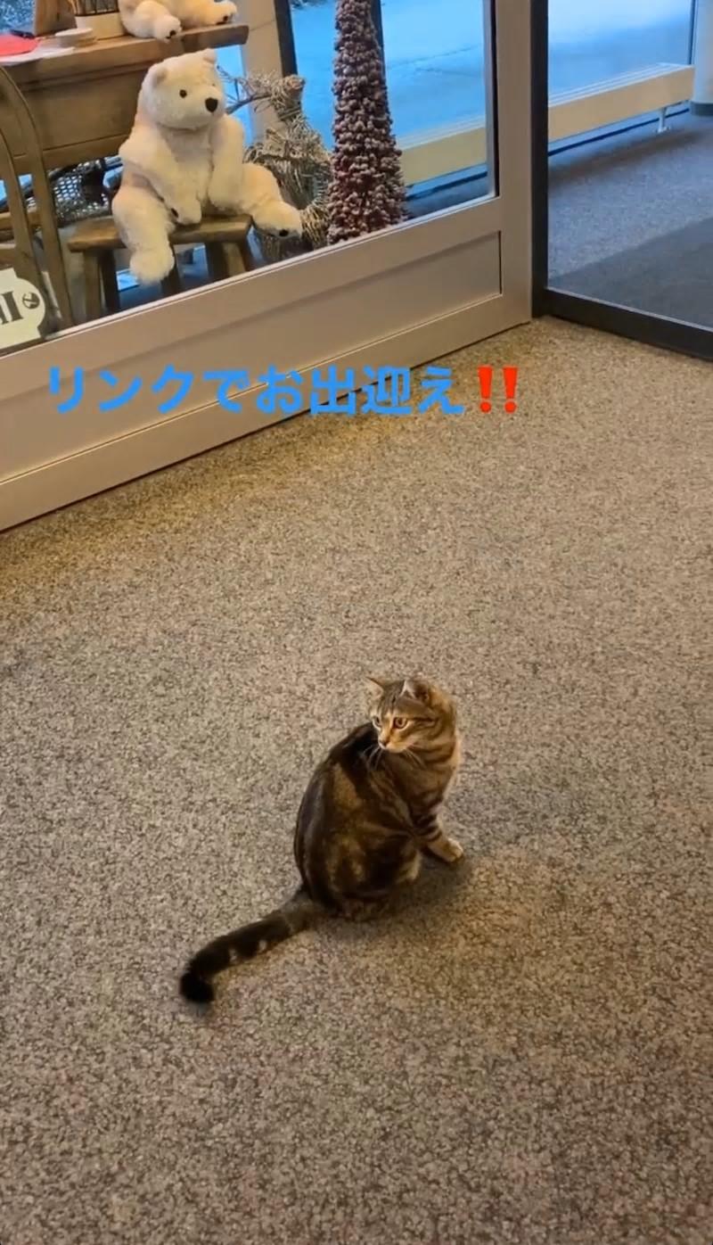 しょーまの猫2