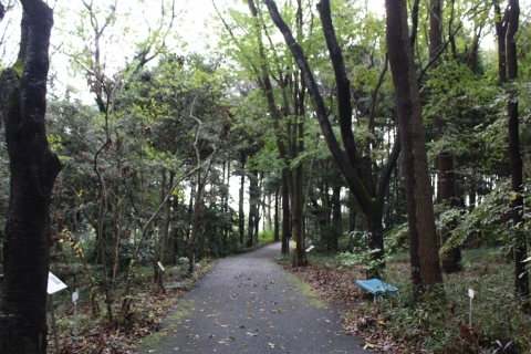 IMG_2707雑木林