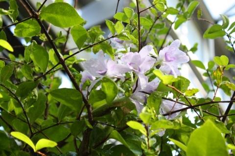 IMG_2822熱帯の花2