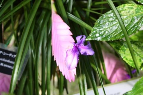 IMG_2823熱帯の花3