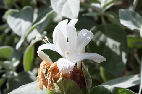 IMG_2832熱帯の花5