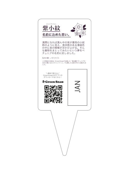 ペチュニア 紫小紋 ラベル候補2