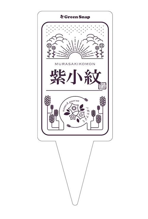 ペチュニア 紫小紋 ラベル候補1