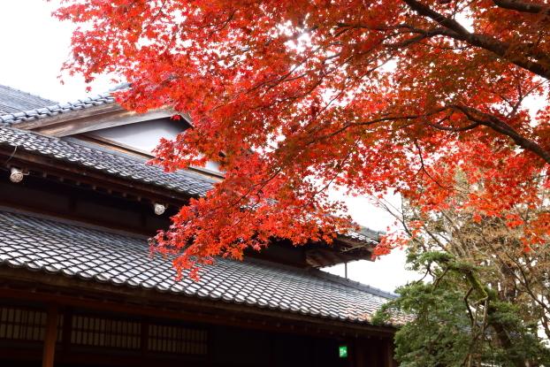 椿寿荘・庭園の紅葉