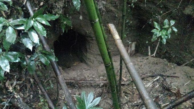 アリの巣-4