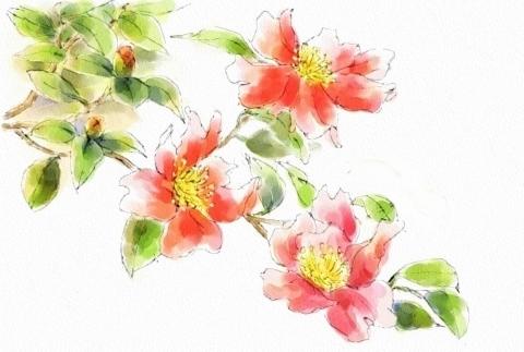 山茶花 (2)
