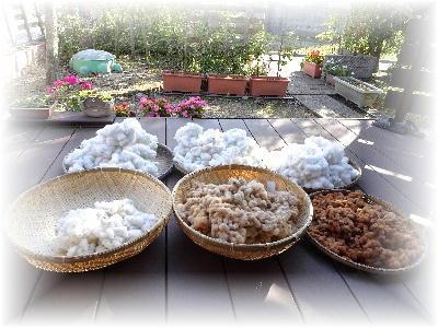 綿の収穫3