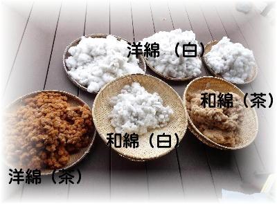 綿の収穫4