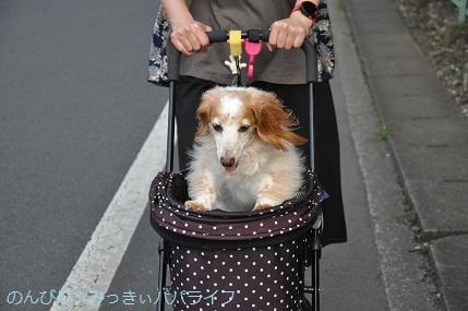 yakitori20190903.jpg