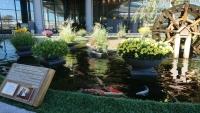 成田空港の大賀蓮の池