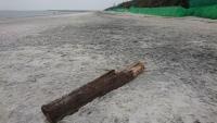 丸太が打ち上げられた浜