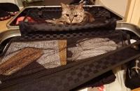 スーツケースにいるネコ