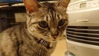 ストーブの前のネコ
