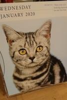 ネコの日めくりカレンダー