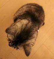 うつむくネコ