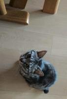 上を向くネコ