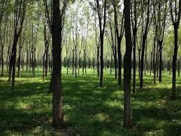森を見て木を見る