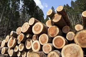 国産材の木材