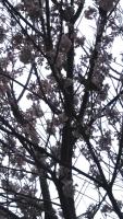 201912三鷹の黄葉・紅葉・桜7
