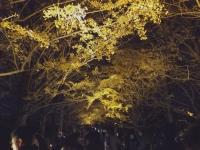 2019130昭和記念公園003