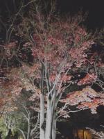2019130昭和記念公園005