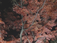 2019130昭和記念公園007