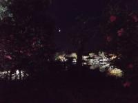 2019130昭和記念公園018
