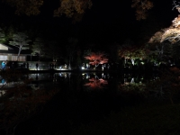 2019130昭和記念公園013